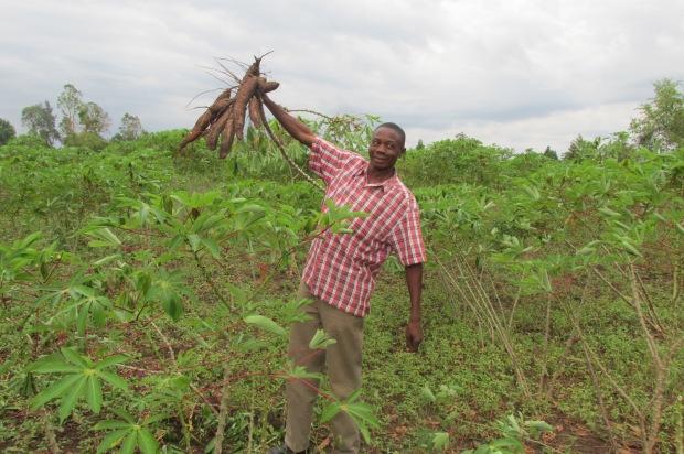 Samson, Ugandan farmer with his cassava